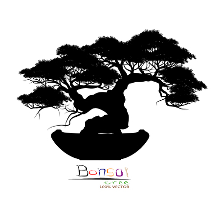 Bonsai tree, Black silhouette of bonsai, Detailed image