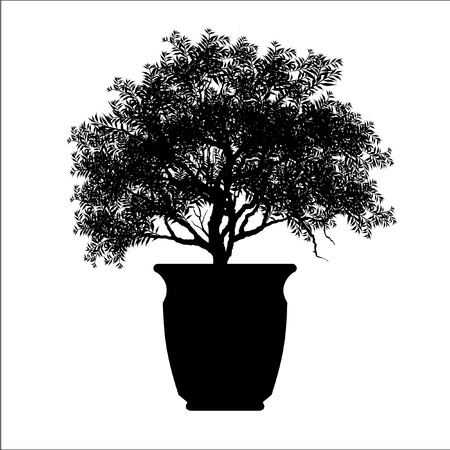bonsai tree, plant silhouette icons on background.