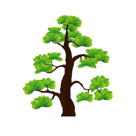 colorful vector of bonsai tree, Detailed image. Vector illustration