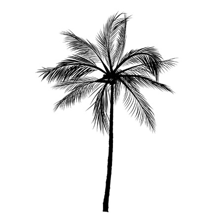 vettore di icone di sagoma di palma su sfondo bianco, icona piatta di albero di cocco per app di vacanza e siti Web.