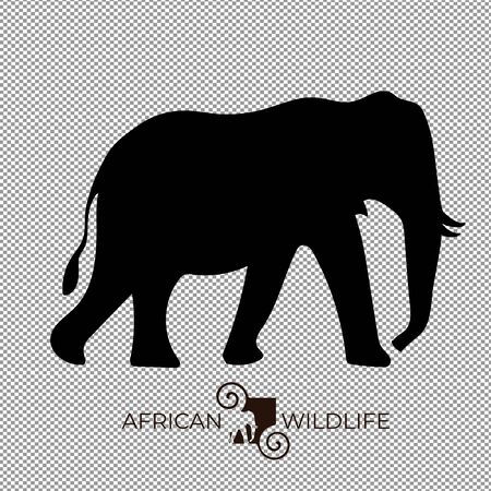 Vector of elephant, africa wildlife.