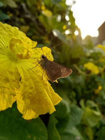 Butterfly image natural Stockfoto