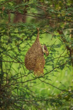 Bird sitting on the nest