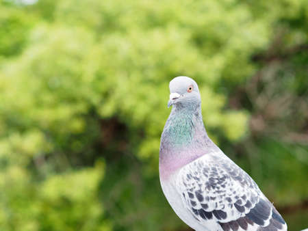 A beautiful pigeon in the park on a sunny day 写真素材