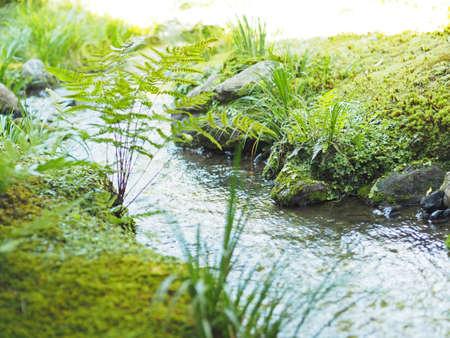 A beautiful river where moss grew