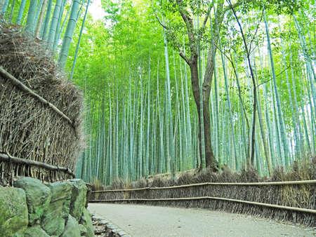 Scenery of beautiful bamboo groves 写真素材