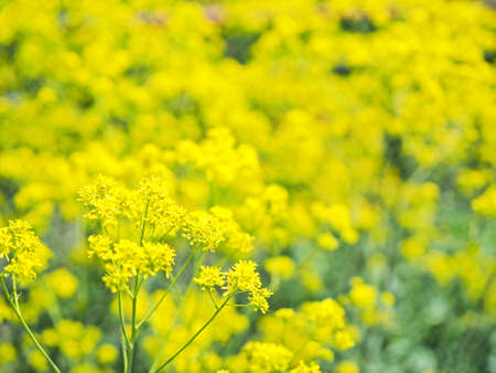 Yellow flowers blooming beautifully