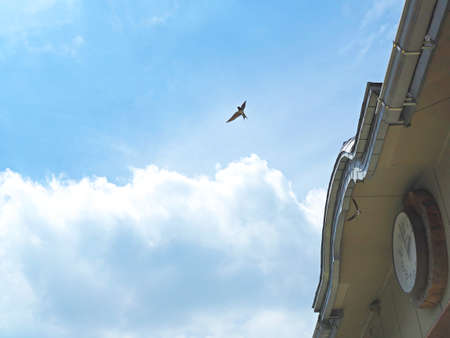 Swallows flying freely in the sky