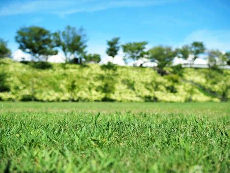 Plaza where beautiful hydrangea is in bloom 写真素材