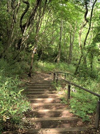 A pleasant green forest trail Zdjęcie Seryjne