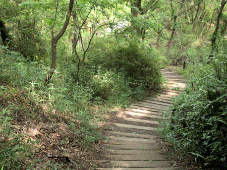 A pleasant green forest trail