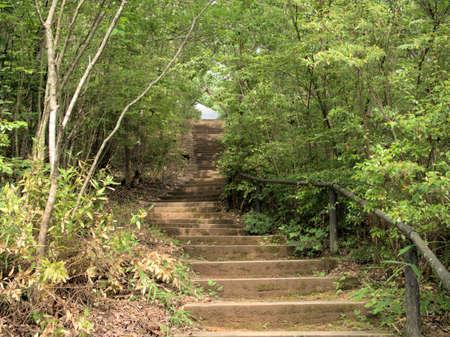 Przyjemny zielony szlak leśny