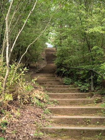 Przyjemny zielony szlak leśny Zdjęcie Seryjne