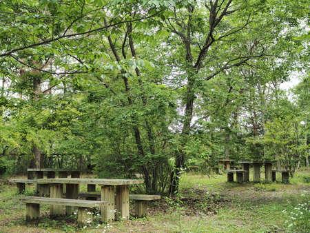 Bench in a pleasant green forest Zdjęcie Seryjne