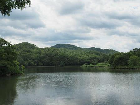 A beautiful pond landscape