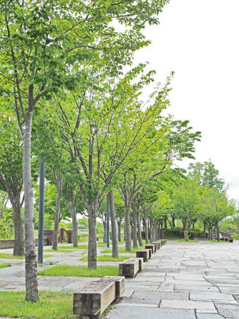 Green scenery of a comfortable park Imagens