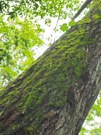 A tree trunk with green moss