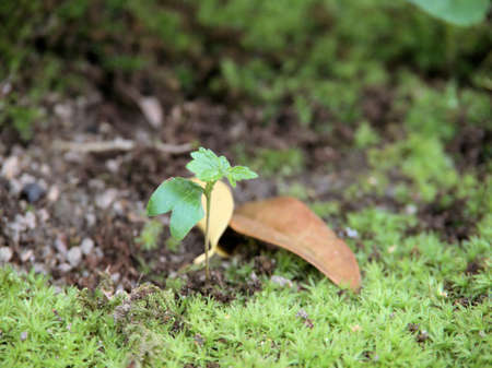 Plant sprouts flourish growing 写真素材