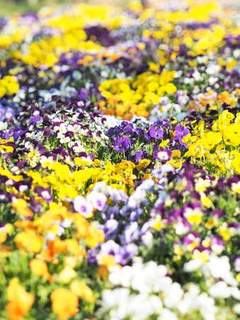 A flower garden that is blooming beautifully Zdjęcie Seryjne