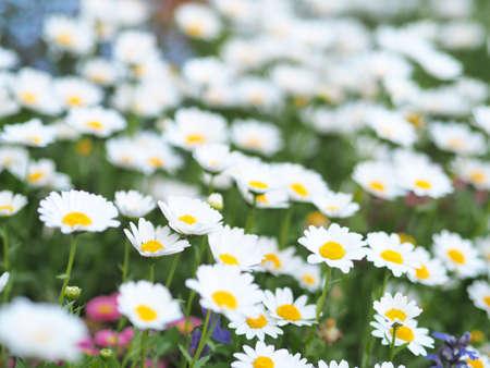 White flowers blooming beautifully