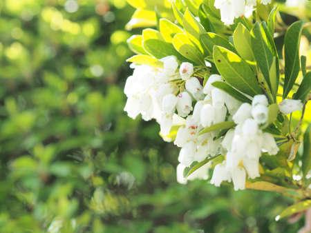White flowers blooming beautifully Zdjęcie Seryjne