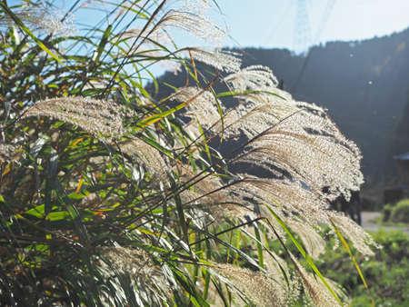 A landscape with a beautiful azalea Reklamní fotografie