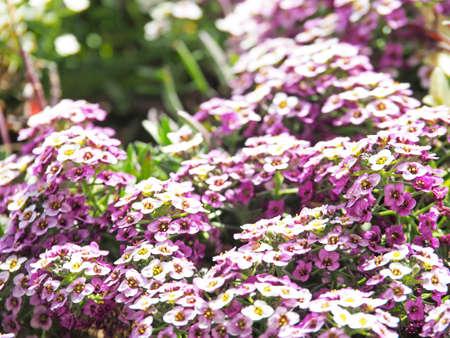 Purple flowers blooming beautifully