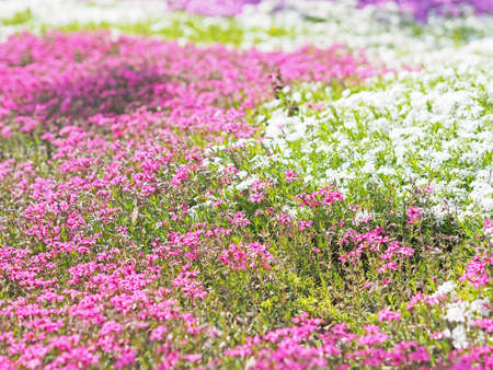 Flowers blooming beautifully