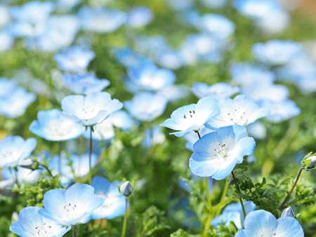 Blue flowers blooming beautifully