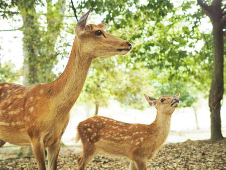 Cute deer at Nara Park