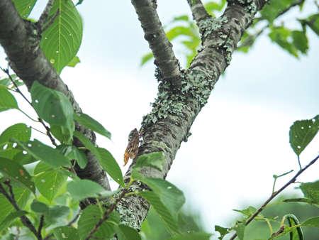 Cicadas on a branch of a tree
