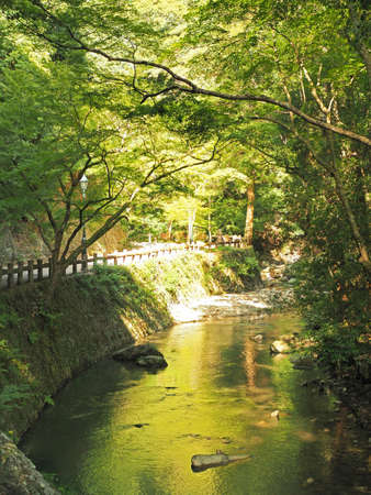 Scenery of beautiful forest of Minoh
