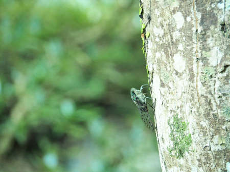 Cicadas on a trunk of a tree 写真素材