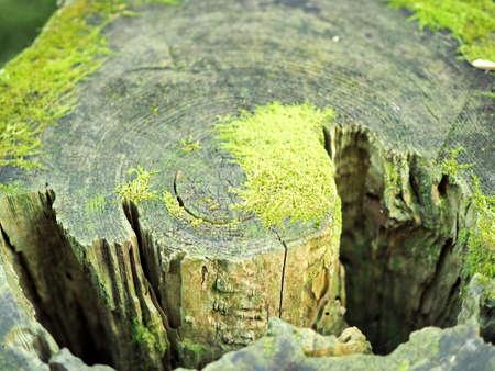 Stumps of moss growing 写真素材