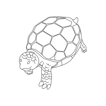 turtle hand drawn. tortoise hand drawn