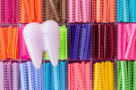 colorful: Tooth model with orthodontics elastomeric rings