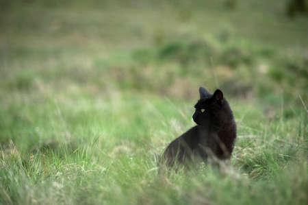 Black Cat in the Verdure Stock Photo