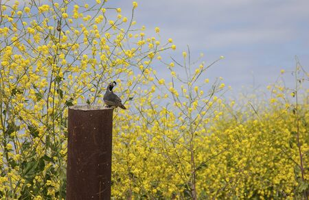 Wandern Sie im Frühjahr durch die Hügel des Crystal Cove State Park. Dem hektischen Leben entfliehen, indem Sie wandern und die Natur genießen. Gesund leben. Wanderwege im Hinterland