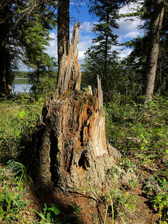 Old tree stump by a lake on a sunny day. Stock Photo