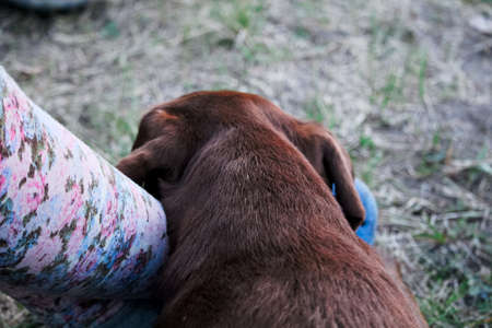 Tired dog resting its head on a leg. Stock Photo