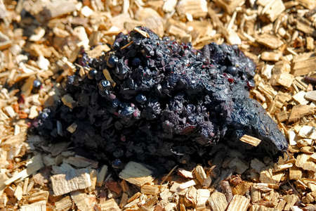 A pile of fresh bear scat on wood chips.