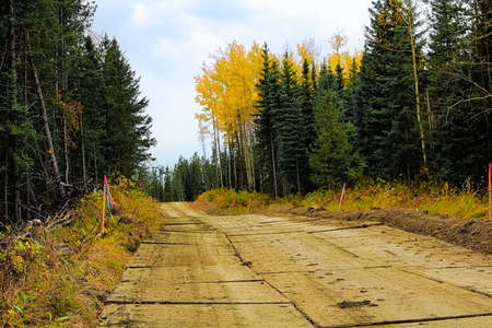 A wooden road made out of rig mats through muskeg.