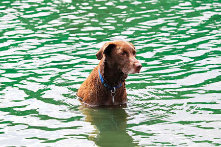 A dog sitting obediently in the water waiting to play