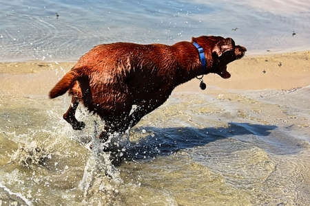 A dog chasing flies by the water