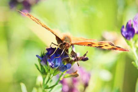 Closeup of a butterflies proboscis feeding on a flower. Stock Photo
