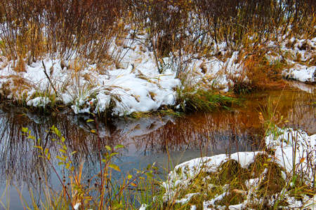 First snowfall in dry grass by water