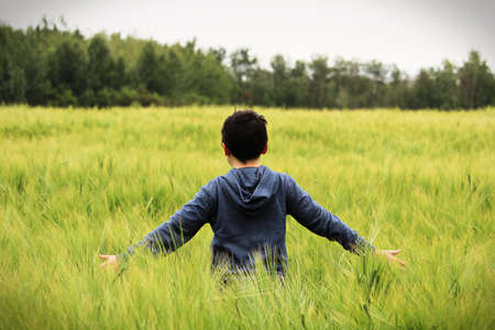 A young boy walks in a green barley field with arms out Stock Photo