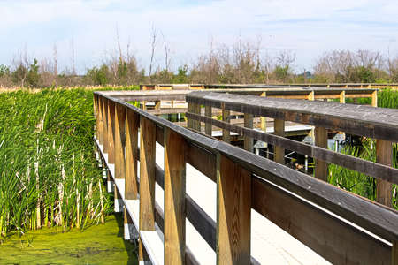 A educational boardwalk built in a marshy area