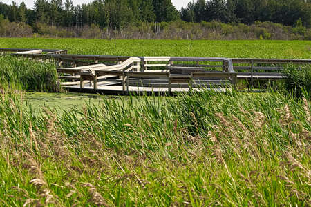Stepped platforms allowing users to enjoy and expore a marsh Stock Photo