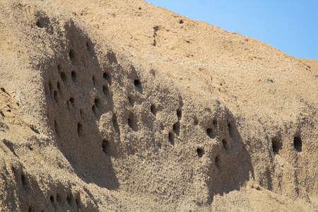 Closeup of Sand Martin Nests in a hillside